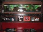 """O aquário meio """"camuflado"""" na decoração"""
