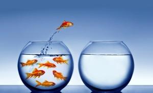 diferentes_aquarios_peixes
